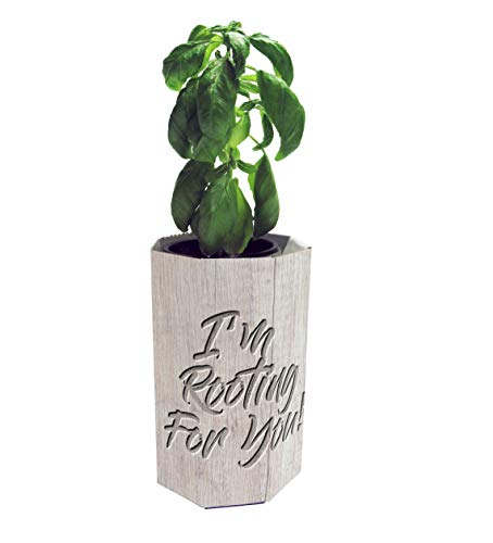 PLANT YOUR HERB Indoor Hydroponic Basil Grow Kit | Certified 100% USDA Organic | I Am Rooting For You | No Soil, Just Add Water | E-Book with Recipes and Care Guide Included |