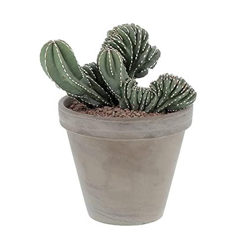 KENTIS - Marginatocereus Crestato - Cactus Raro - Pianta Grassa - H 30-45cm Vaso in Terracotta Ø18cm