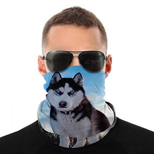 Masque humoristique pour homme et femme Motif poussière de husky