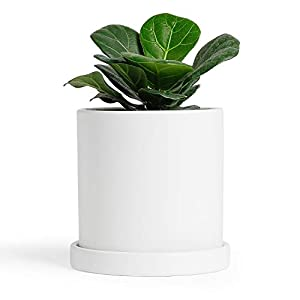 Ceramic Plant Pot – 4.3 Inch Matte White Small Cylinder Ceramic Planter for Succulents, Cactus, Flower with Drainage Hole and Tray, Set of 1