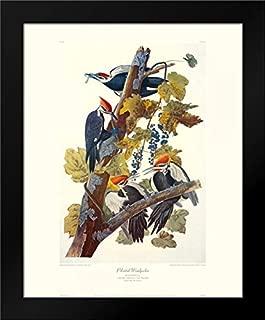 Pileated Woodpecker (Decorative Border) 20x24 Framed Art Print by Audubon, John James