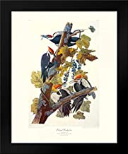 audubon pileated woodpecker print
