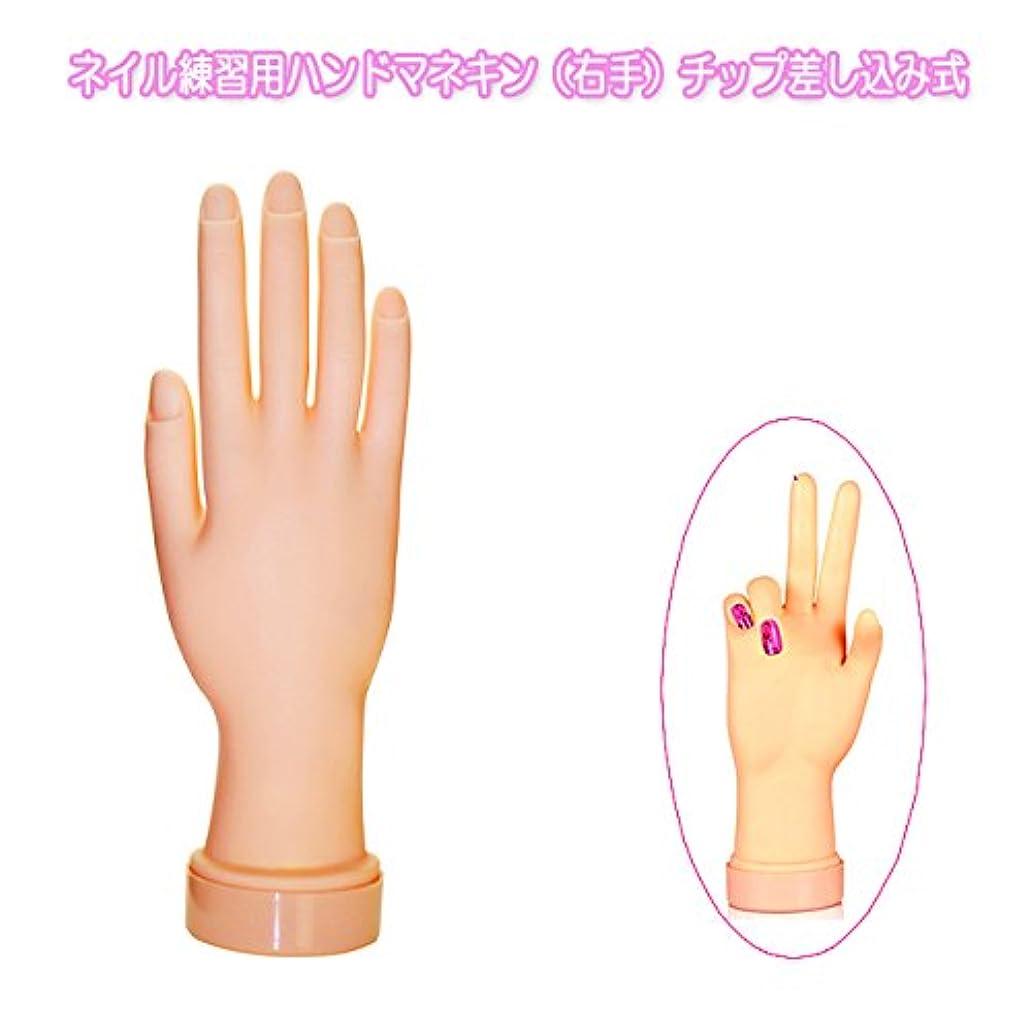 休眠理想的予防接種ネイル練習用ハンドマネキン(右手)チップ差し込み式
