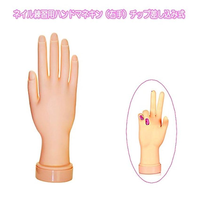 動第九郵便局ネイル練習用ハンドマネキン(右手)チップ差し込み式