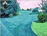vonly 200 PC/Beutel Regenbogen-Lächeln Turf Grassseeds, Golf Home Special Grade Rasensamen, Fußballfelder, Villa Blumen Pflanzen Garten für Kinder: 17