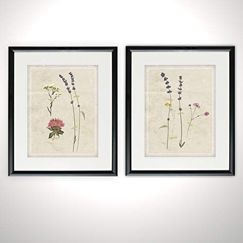 Renditions Gallery Pressed Lavender 2 Piece Set Vintage Wall Decor Paintings Illustration Line Art Framed Prints Flower Pictures, 16 x 20 x .75, 2 Count