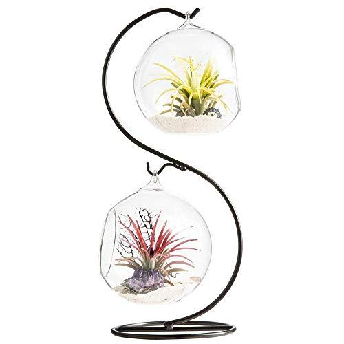 TJW Lot de 2 vases en verre à suspendre pour plantes grasses, fougères, mousses, bonsaïs, fleurs