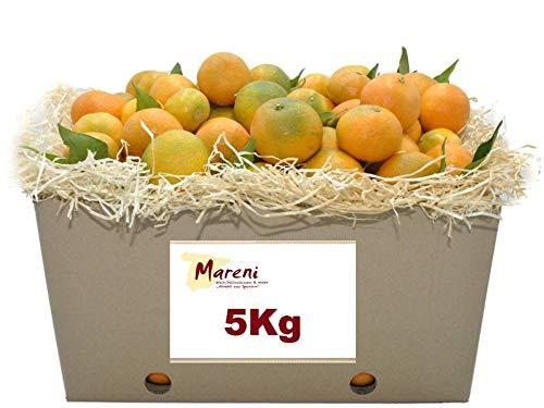 Mandarinen - täglicher Versand - frisch geerntet am Vortag - 5kg