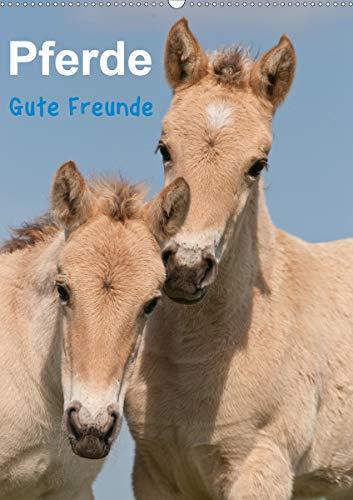 Pferde Gute Freunde (Wandkalender 2021 DIN A2 hoch)