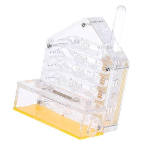 HomeDecTime Ameisenfarm Ameisen Nest Acryl Fütterung Box - Typ 2