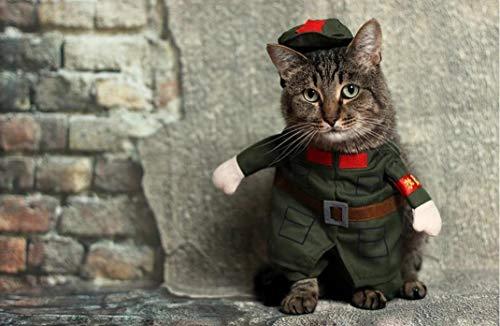 Katzen-Kostüm, niedliches Haustier-Kostüm, zum Selbermachen, Ölgemälde, Digitalgemalde, handbemalt, Tier, Maltuch, für Wohnzimmer, Dekoration