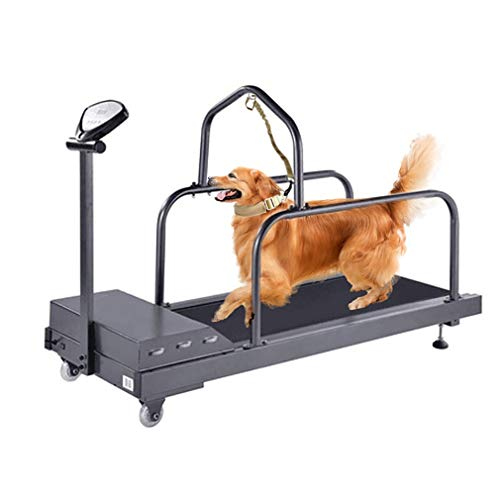 QXFJ Cinta Correr Mascota Caminadora Interior Velocidad Regulable MúLtiples Modos Ajustables Rodillo Externo FáCil Montar DiseñAdo para Mascotas Velocidad MáXima 10 Km/H Pantalla LED