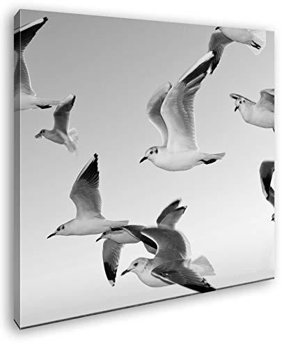 deyoli Moscas Gaviotas Sobre Costa Efecto: Blanco y Negro como Lienzo, diseño en Marco de Madera, impresión Digital Marco, no es un póster o Cartel, 70 x 70
