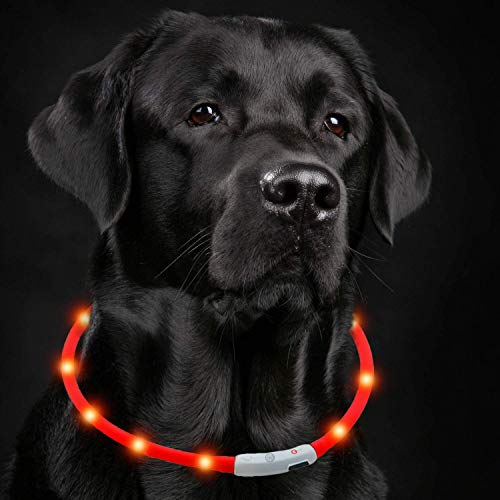 Petgold LED Halsband für Hunde Blinkhalsband – USB Leuchthalsband Hund in Rot 30-70 cm - Hundehalsband Leuchtend - einfach Kürzbar & 3 Modi