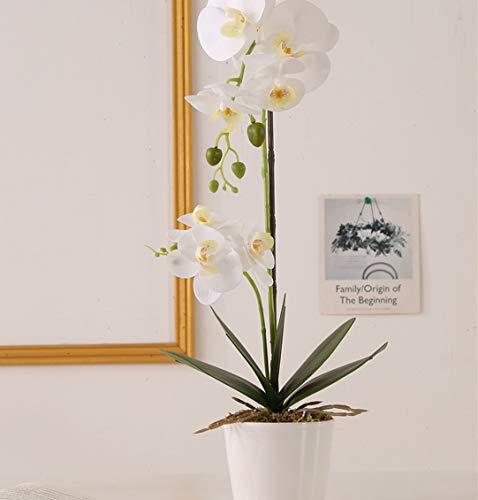 ENCOFT Flores Artificiales Plástico Flor de Phalaenopsis Realista Orquídea Mariposa con Maceta Imitación Cerámica Decoración (Blanco (M))
