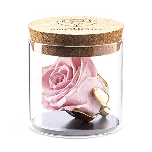 Amoroses Bijou - Rosa Stabilizzata Eterna con Calice Placcato Oro 24K in Barattolo di Vetro | Idea Regalo Bimba Battesimo Bebè (Rosa Rosa)