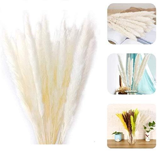 Sinwind - 15 unidades de hierba seca, ramo de flores natural, decoración para interiores, fotografía, boda, color blanco