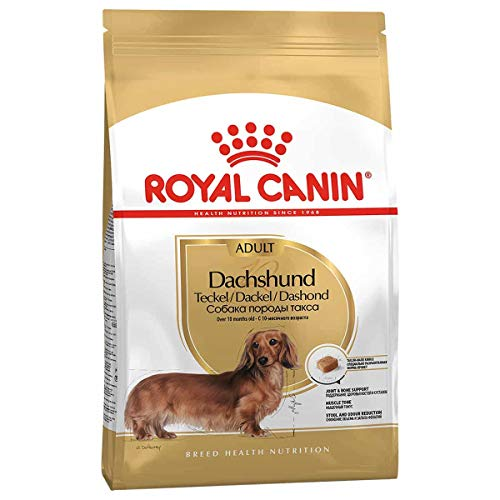 Royal Canin Dachshund - Alimento seco para perros (1,5 kg)