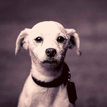 Захватывающий - Милые Собаки