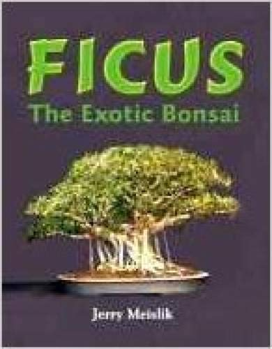 Ficus : The Exotic Bonsai