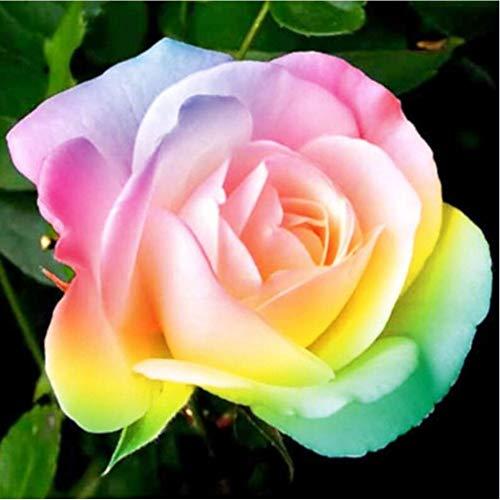 SINACO Kit de pintura de diamante 5D para hacer tú mismo, para adultos, decoración del hogar, diseño de flores, 11,8 x 11,8 pulgadas