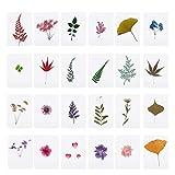 Mix di fiori pressati foglie piante esemplari riempitivi per la creazione di gioielli in resina epossidica