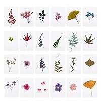 luoshミックスプレスフラワーリーフエポキシ樹脂ジュエリー製造用植物標本フィラー