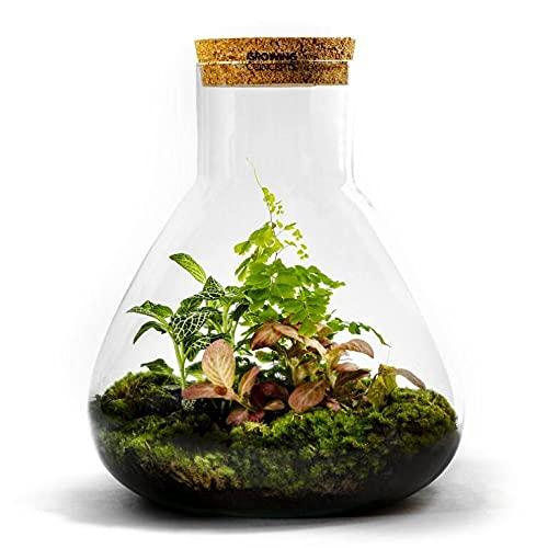 DIY Giardino in bottiglia Sostenibile: Erlenmeyer Grande – Botanisch