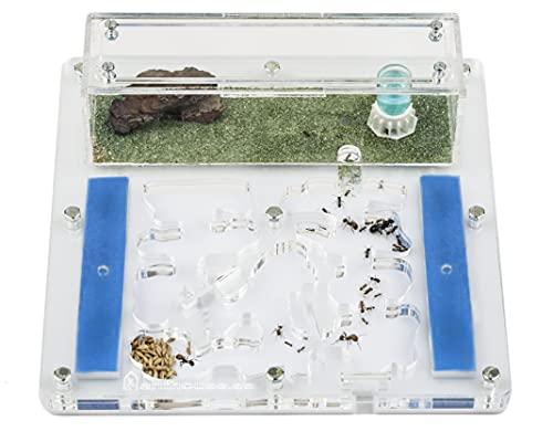 AntHouse - Hormiguero Acrílico - Kit Educativo Espuma 15 x 15 x 1,3 cm - Transparente - Hormigas Gratis Incluidas