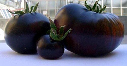 100 pcs Précipité New Plantes d'extérieur Promotion Jardin semences de tomates en pot fruits Bonsai Balcon légumes 12 graines