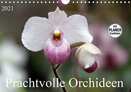 Prachtvolle Orchideen (Wandkalender 2021 DIN A4 quer)
