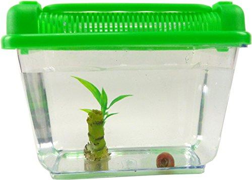 Evil Wear Aquarium Schnecke im Set Wasser-Schnecke braun mit Pflanze und Aquarium Kinder Erwachsene Aqua Snail Plant Einsteiger Starter Set (2Stk Mini Teufel?) 4793