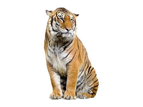 GRAZDesign Wandtattoo Tiger, Wandsticker Afrika Tattoo, Wohnzimmer Tiere Asien / 67x40cm