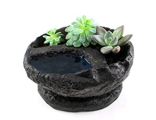 dekorative Bonsaischale mit Miniteich + Untersetzer handmade 3x Sukkulenten Succulenten Pflanzen Indoor dekorative Zimmerpflanzen Topf oval 20,5x17x12cm anthrazit (Art.-Nr.: 43220)