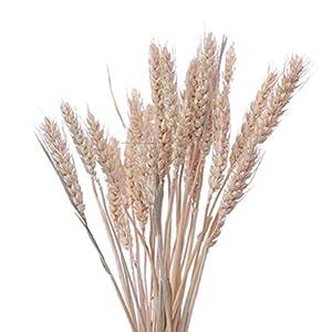 VOSAREA 15 unids Flores secas Naturales Color Crudo Color Secado Ramos de Trigo Trigo gavilla Bundle Decorativo…