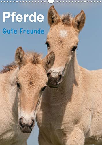 Pferde Gute Freunde (Wandkalender 2021 DIN A3 hoch)