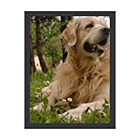 INOV 犬 ゴールデン リトリーバー アートフレーム インテリアフレーム 新生活応援 かわいい おしゃれ アートパネル インテリア ギフト プレゼント 30x40cm