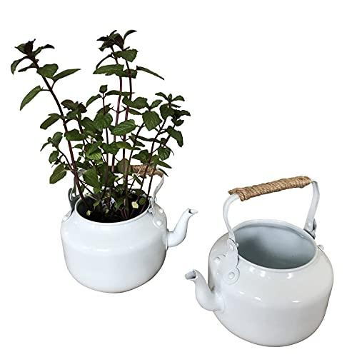 2 Blumentöpfe Emaille Teekannen zum Bepflanzen - Garten Deko Kräutertopf P27