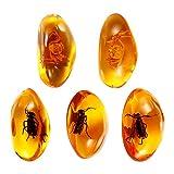 VORCOOL 5 Pz Ambra Artificiale Ambra Naturale Ambra Fossile di Pietra con Insetti Campioni di Pietre Pietre Campioni di Cristallo Decorazioni per La Casa Collezione Ciondolo Ovale