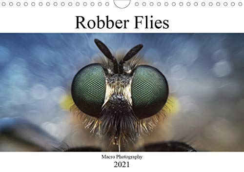 Robber Flies (Wall Calendar 2021 DIN A4 Landscape)