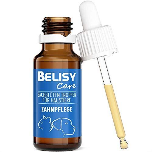 BELISY Bachblüten Zahnpflege Tropfen für Hunde & Katzen - Spezial Bachblütenmischung für Zähne mit Thymian & Pfefferminze - 20 ml