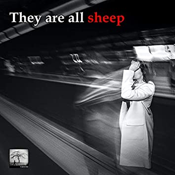 They Are All Sheep