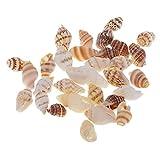 SDENSHI Lote de 30 Conchas Marinas Pequeñas, Conchas Marinas Mixtas de Playa, Conchas para Manualidades Y Exhibiciones