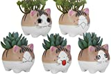 VanEnjoy Set of 5 Large Version Cat Succlent pots Planter, with Drainage Hole, Flower Pot, Handmade Ceramic Ornaments Cat Gifts for Cat Lovers Office, 4.7 inch