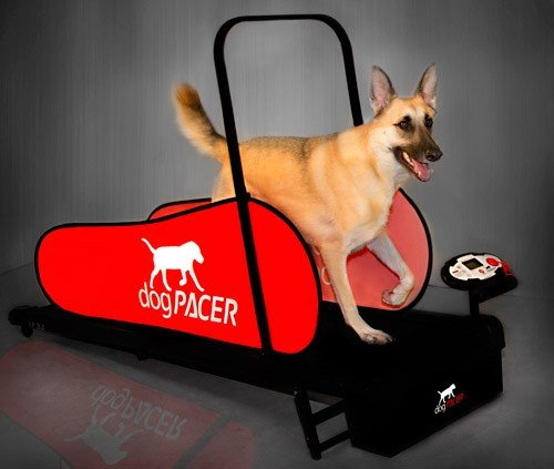 DogPacer Folding Treadmill for up to 179lbs
