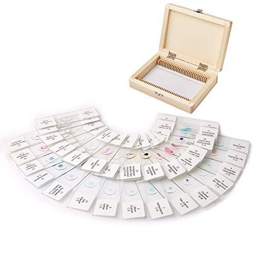 Happylife Mikrospie Zoologie Dauerpräparate 30 Stück Lern Experiment Set Dauerpräparate Objektträger in einer edlen Holzbox