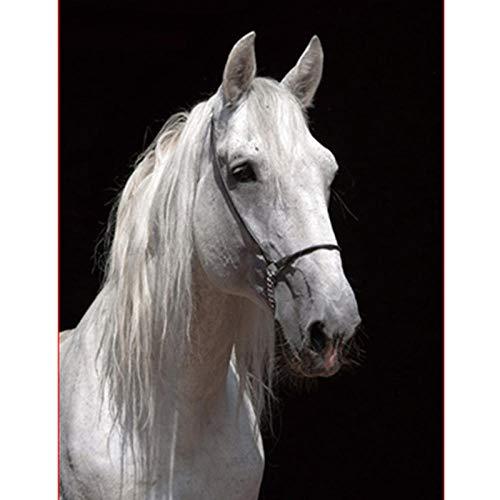 Schilderen op nummer DIY40x50cm Een mooi paard Dier Canvas Bruiloft Decoratie Kunstfoto Gif