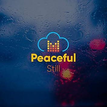 # 1 Album: Peaceful Still