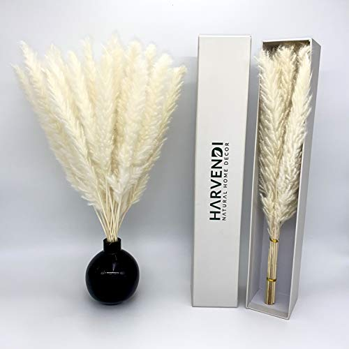 """Natural Dried White Small Pampas Grass Decor 