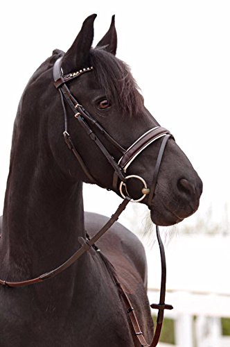 Genisys NEU! Trense braun, weiß unterlegt, Schwedisches Reithalfter inkl Zügel Pony